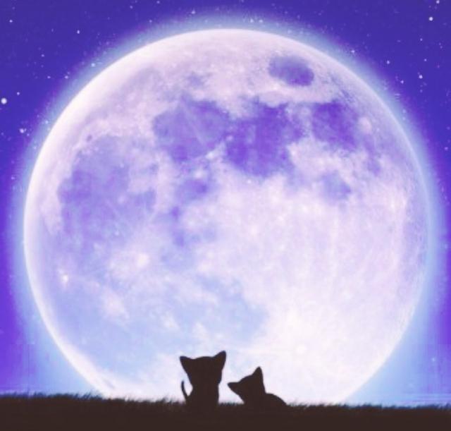 ⭐️7月のMAX瞑想会⭐️